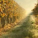 La mezzadria: tra storia e tradizione – parte II