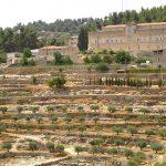 I vini delle Langhe e della Palestina
