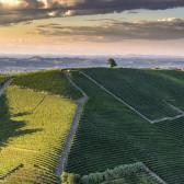 Il Barolo, un vino, una storia, un simbolo dell'enologia del Piemonte
