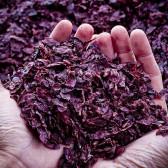 L'utilizzo delle vinacce: scelte di sostenibilità ambientale