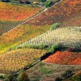 Se un vino ha 7,5 % di alcol effettivo e un residuo zuccherino di 85 grammi/litro, quale sarà il suo alcol complessivo?